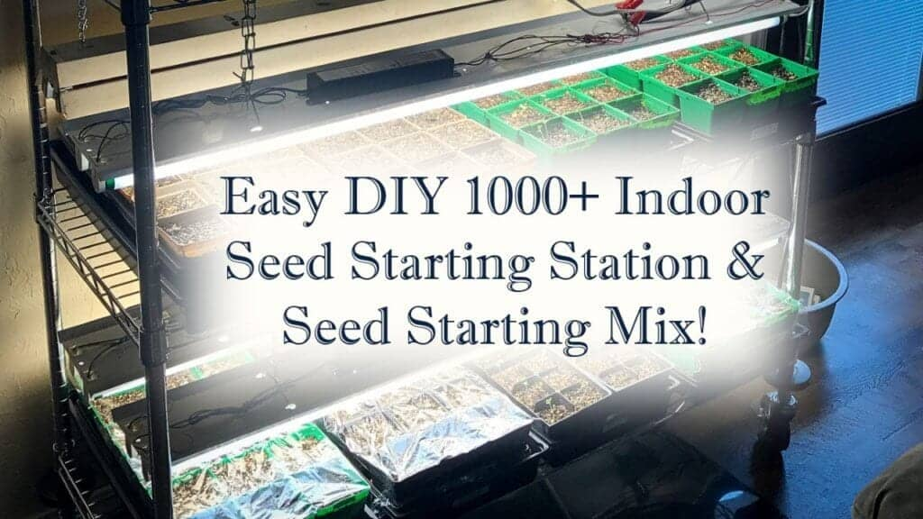 Seed starting header