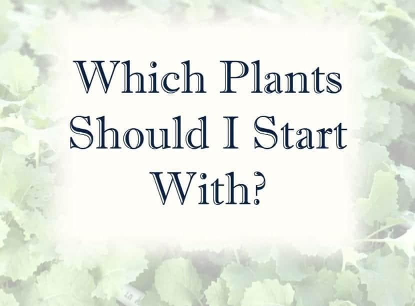 header which plants