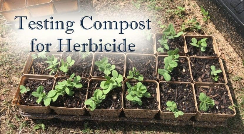 Testing compost for herbicide