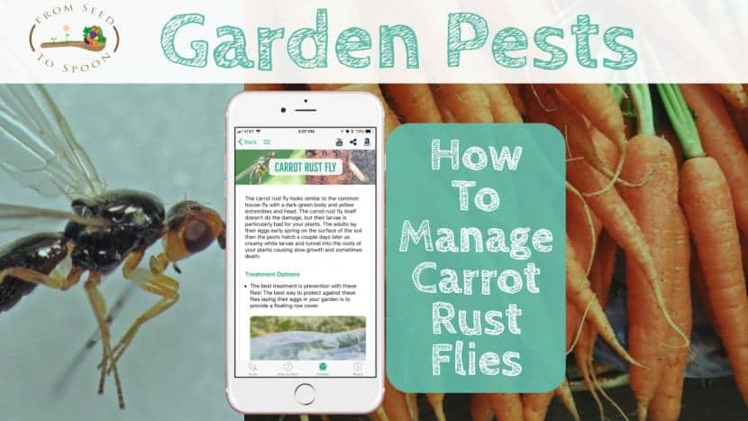 Carrot Rust Fly blog post