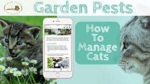 Cats blog post