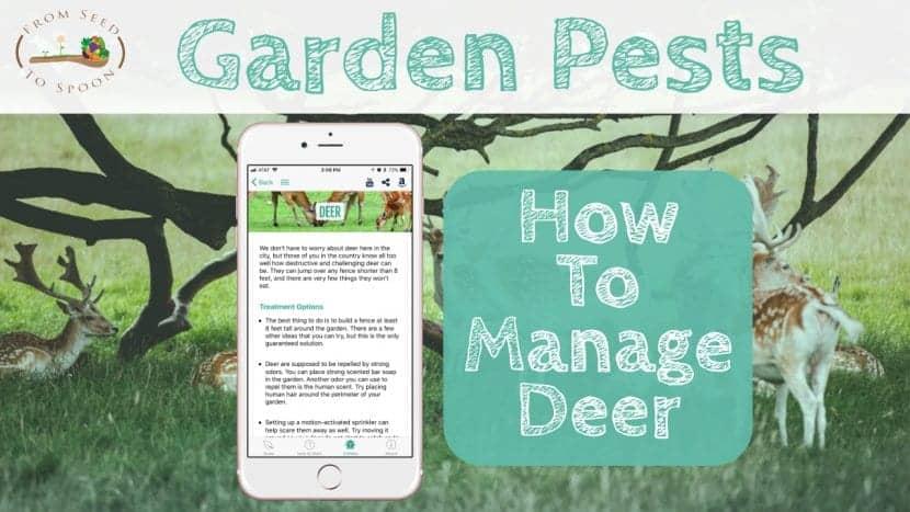 Deer blog post
