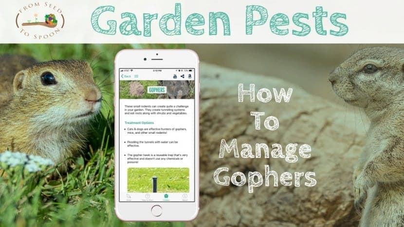 Gophers blog post