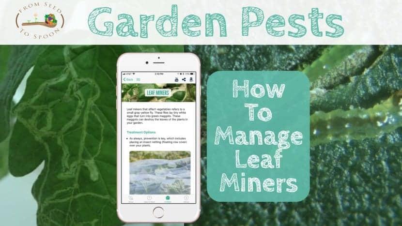 Leaf Miners blog post