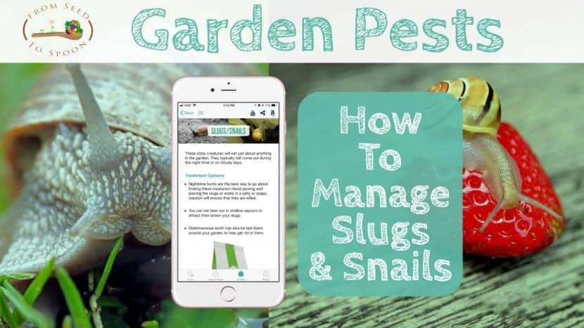 Slugs_Snails blog post