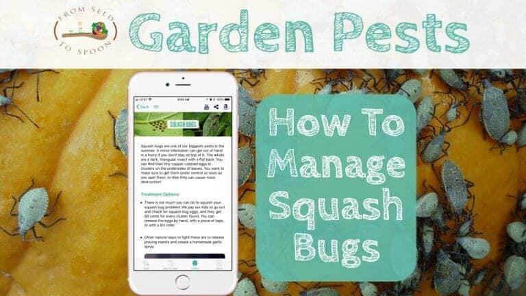 Squash Bugs blog post