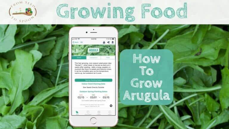 Arugula blog post