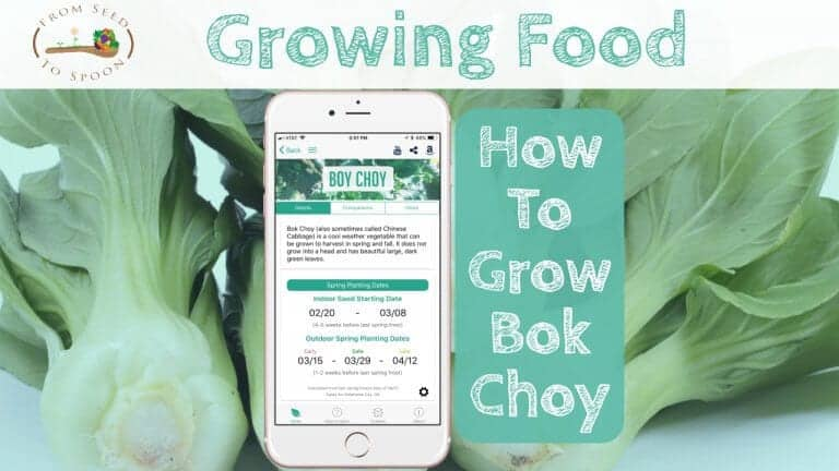 Bok Choy blog post