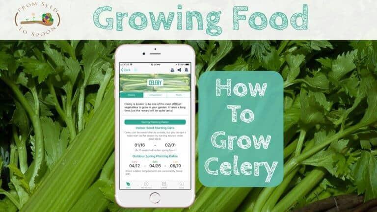 Celery blog post