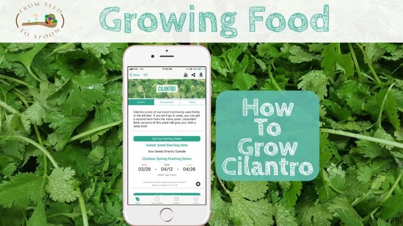 Cilantro blog post