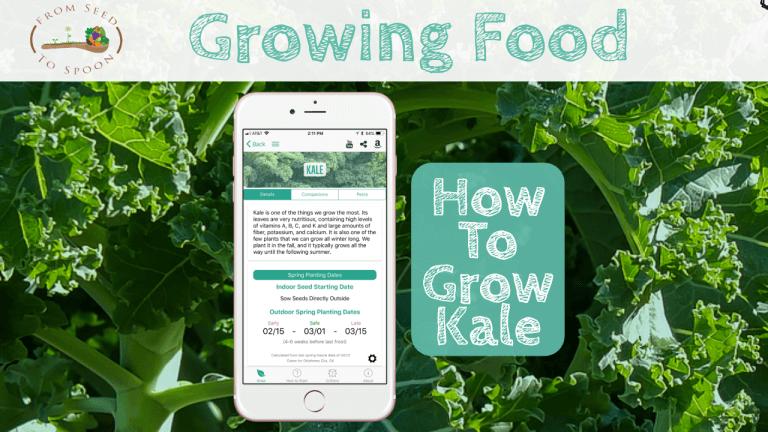 Kale blog post
