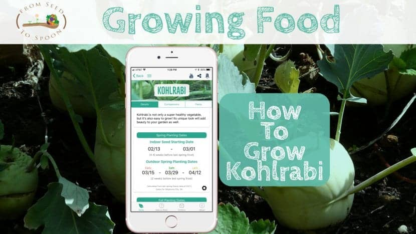 Kohlrabi blog post
