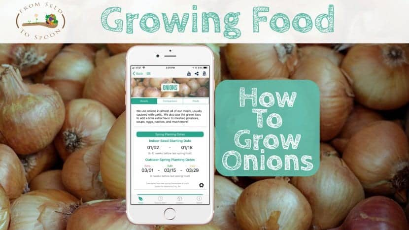Onion blog post