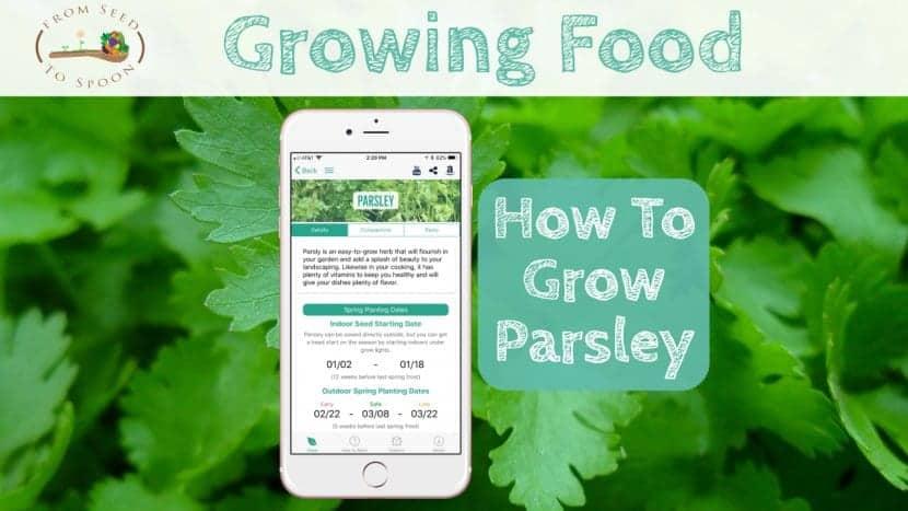 Parsley blog post
