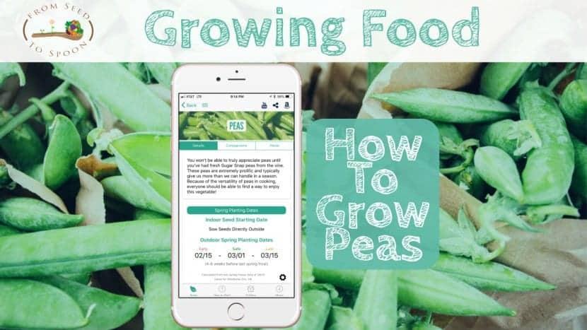 Peas blog post