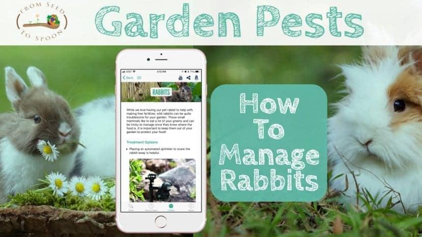 Rabbits blog post
