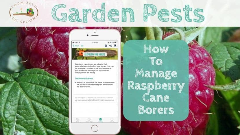 Raspberry Cane Borer blog post