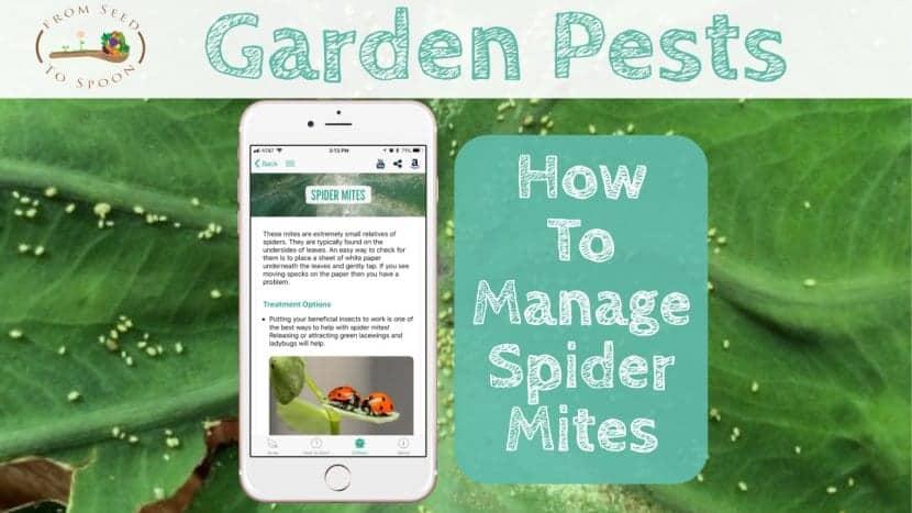 Spider Mites blog post
