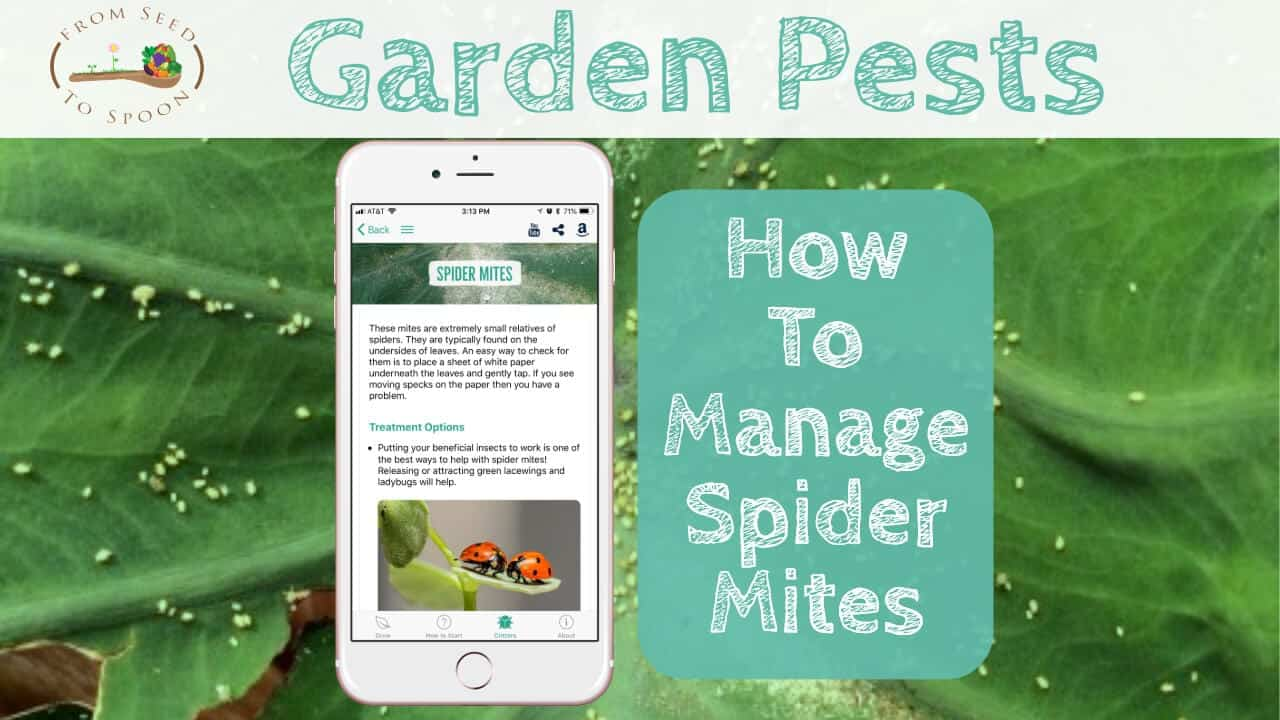 How to: Manage Spider Mites in Your Garden - From Seed to Spoon