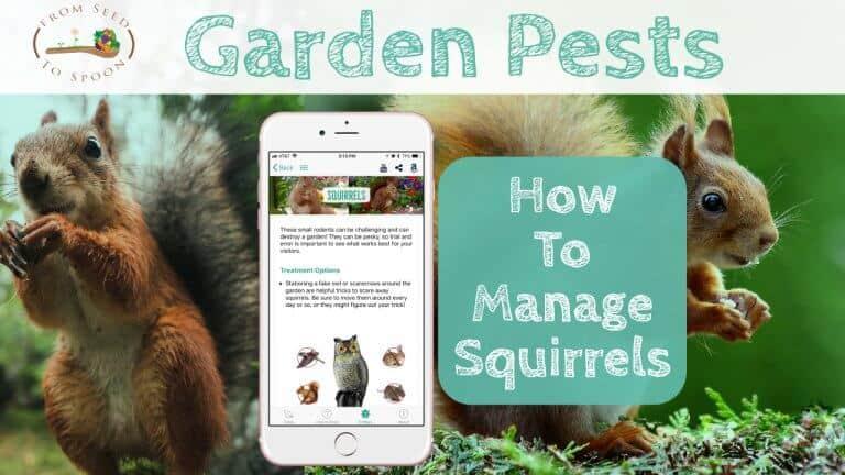 Squirrels blog post