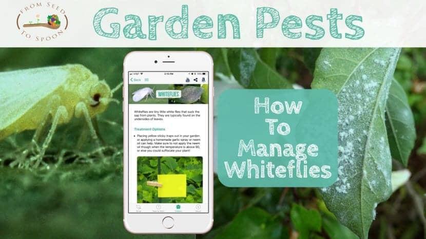 Whiteflies blog post Copy