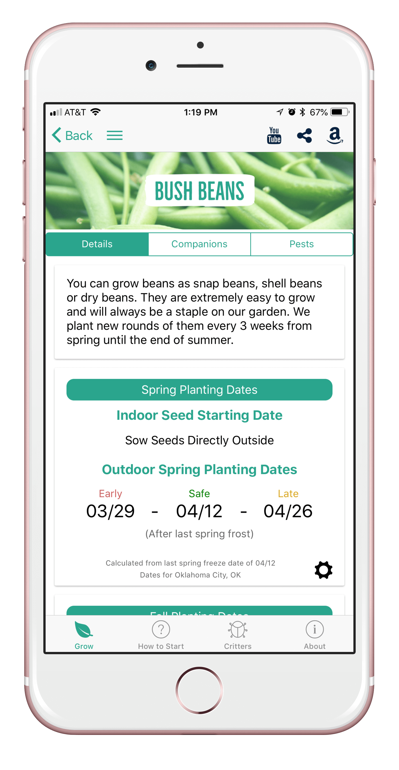 bushbeans