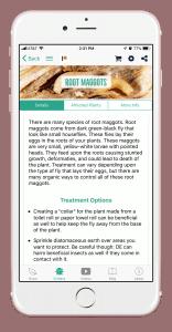 root maggots