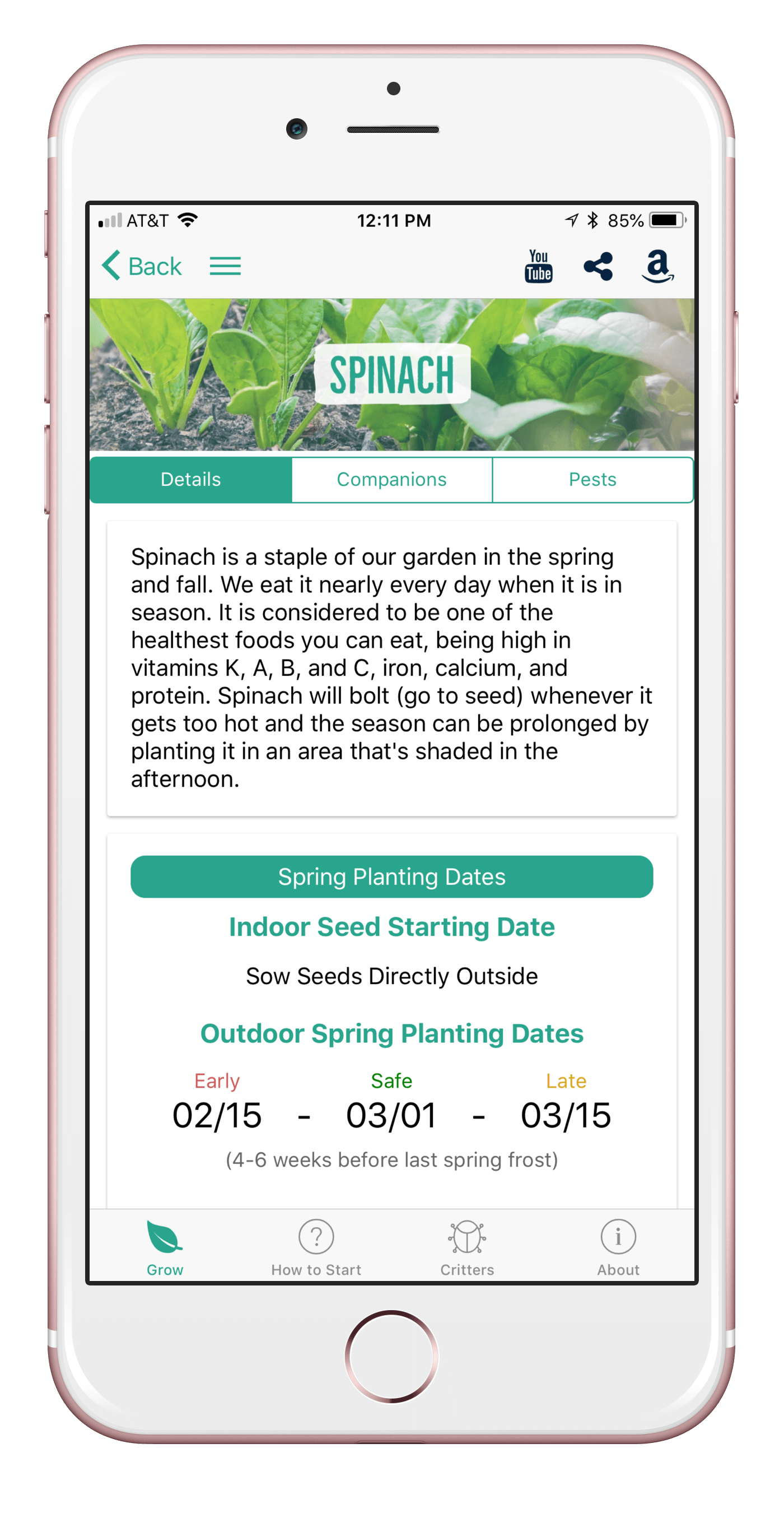 spinach1