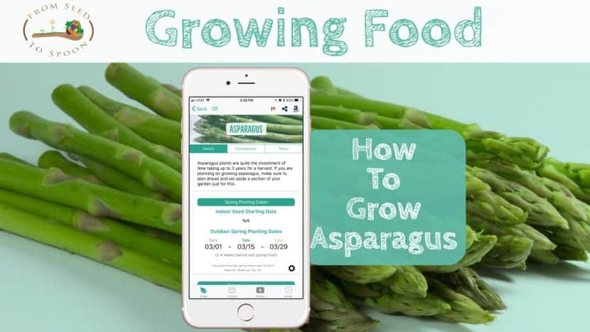 Asparagus blog post