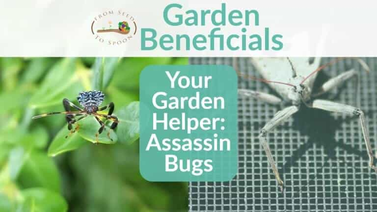Assassin Bugs blog post