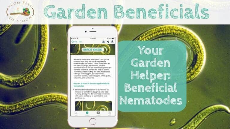 Beneficial Nematodes blog post