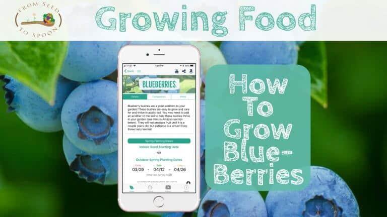 Blueberries blog post