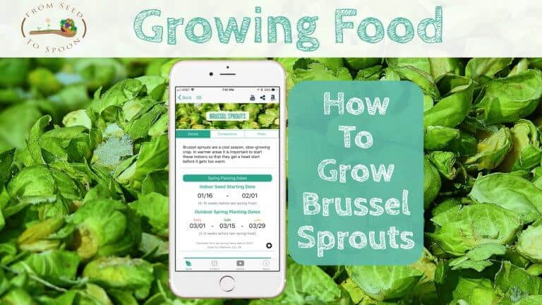 Brussel Sprouts blog post