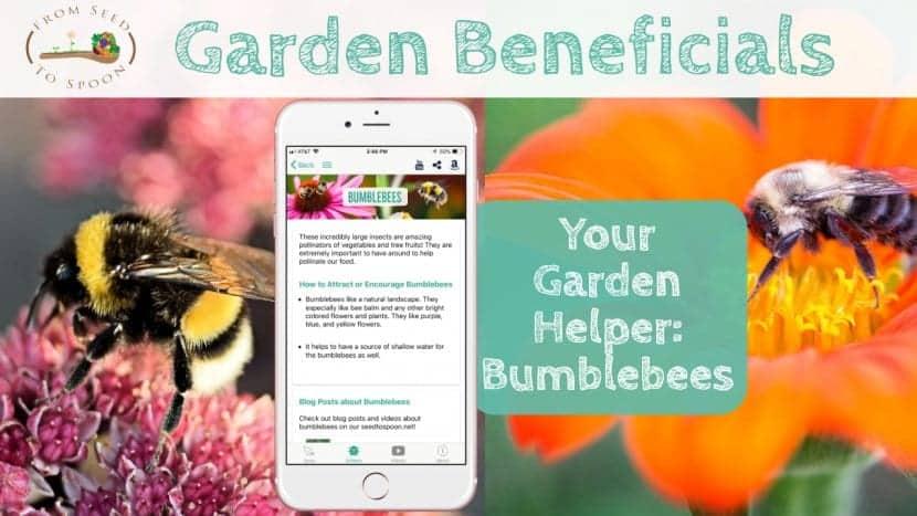 Bumblebees blog post