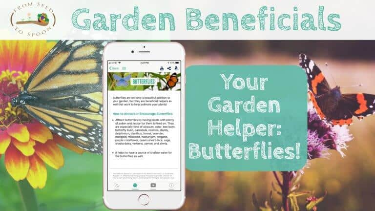 Butterflies blog post