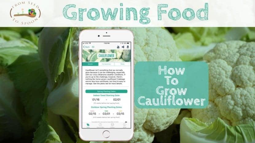 Cauliflower blog post
