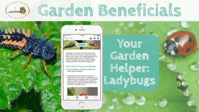 Ladybugs blog post