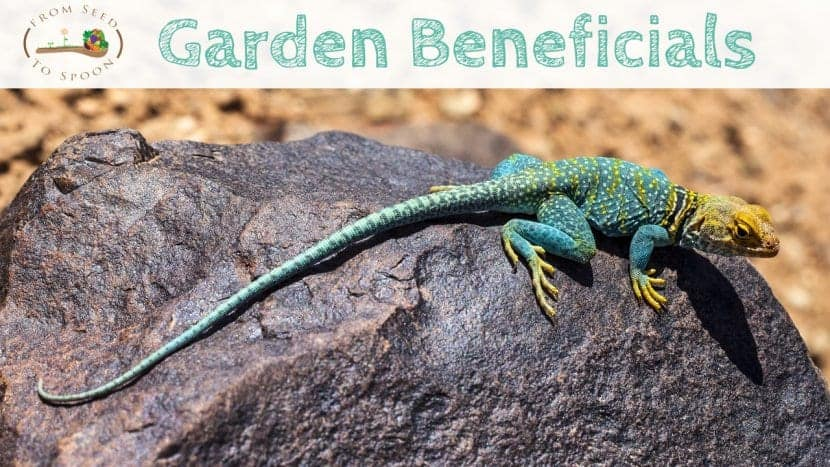 Lizards blog post