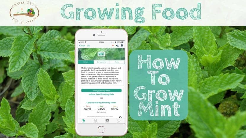 Mint blog post