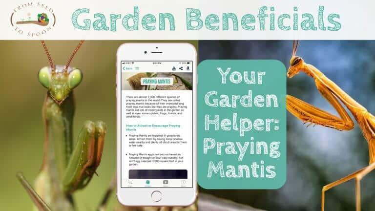 Praying Mantis blog post