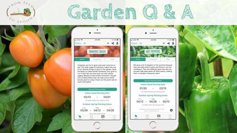 Q&A_ Tomato & Pepper plants