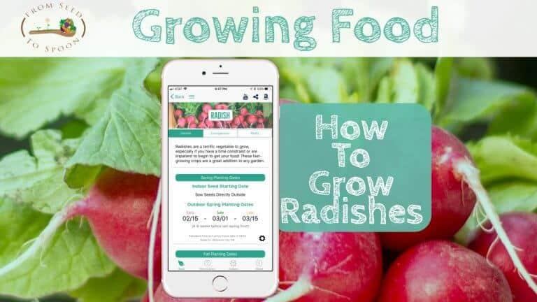 Radish blog post