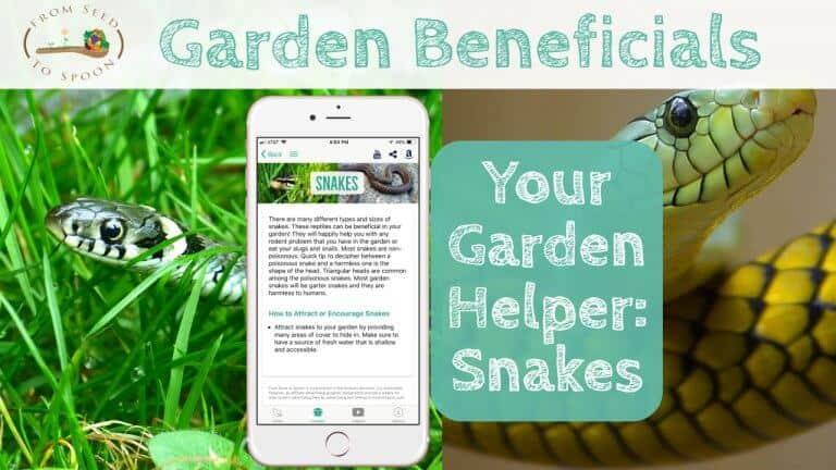 Snakes blog post