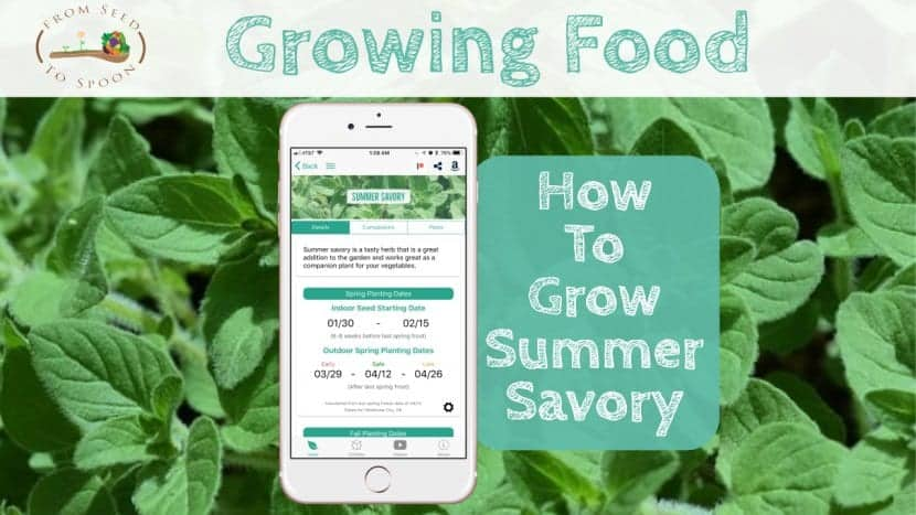 Summer Savory blog post