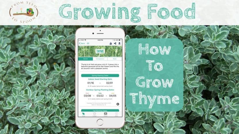 Thyme blog post