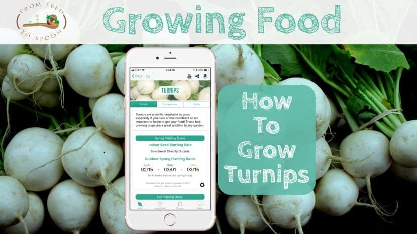 Turnips blog post