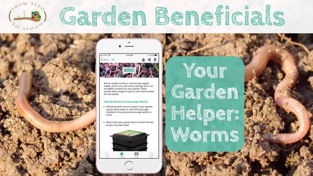 how worms help us turn kitchen scraps into plant gold