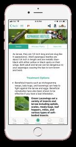 asparagusbeetles