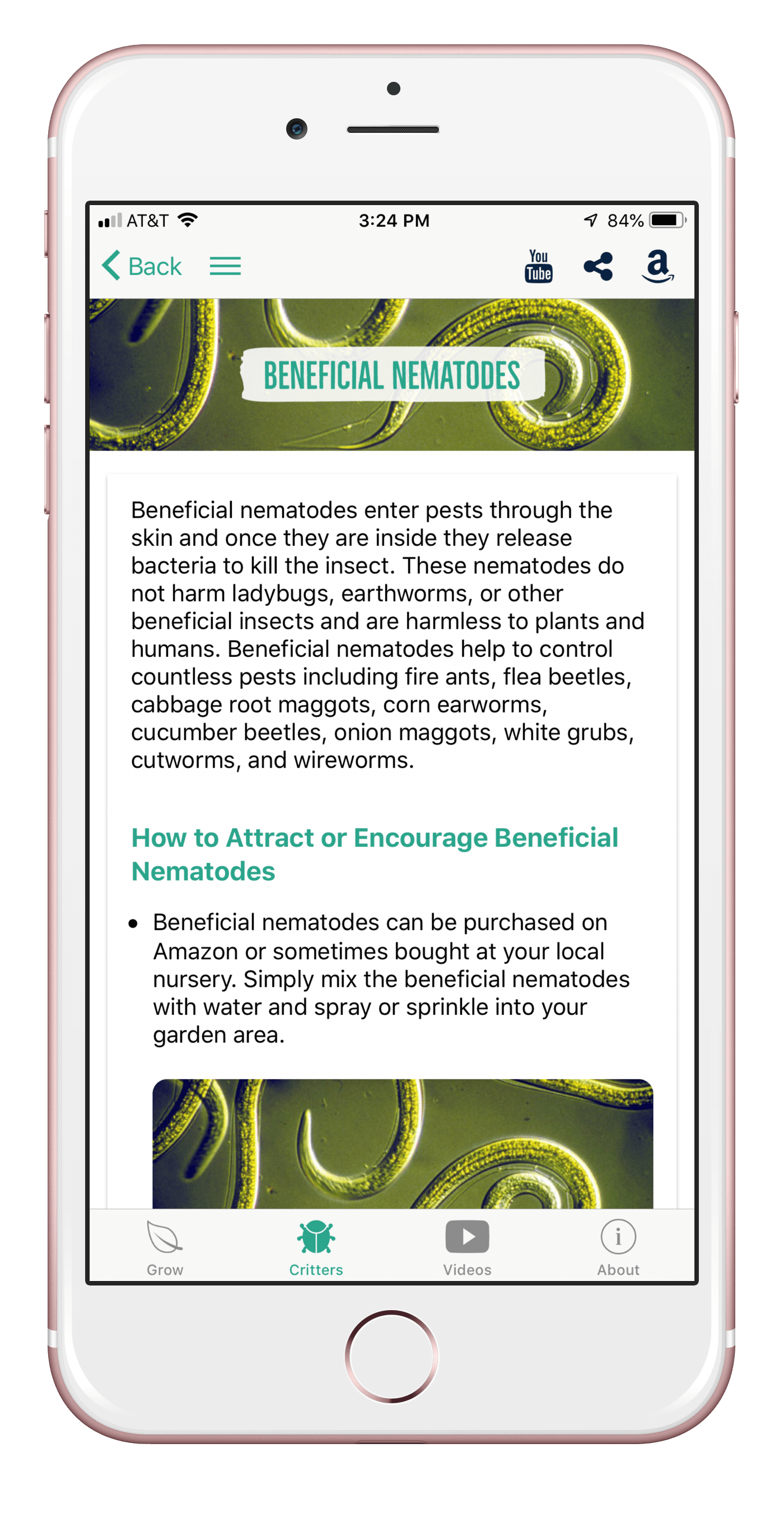 beneficialnematodes