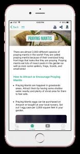 prayingmantis